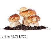 Купить «Белые грибы боровики на белом фоне», фото № 3781775, снято 26 августа 2012 г. (c) Лисовская Наталья / Фотобанк Лори