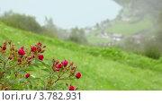Купить «Прибрежная деревня на берегу фьорда в нижней части холма», видеоролик № 3782931, снято 15 мая 2012 г. (c) Losevsky Pavel / Фотобанк Лори