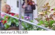 Купить «Роза перед домом, девушки играют на скрипке», видеоролик № 3782935, снято 15 мая 2012 г. (c) Losevsky Pavel / Фотобанк Лори