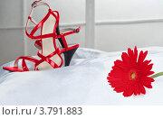 Туфли. Стоковое фото, фотограф Конушкина Екатерина / Фотобанк Лори