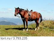 Лошадь в горах. Стоковое фото, фотограф Анастасия Новикова / Фотобанк Лори