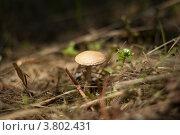 Маленький гриб. Стоковое фото, фотограф Дмитрий Ворона / Фотобанк Лори