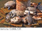 Жизнь черепах. Стоковое фото, фотограф Татьяна Скрипниченко / Фотобанк Лори