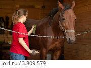Девушка чистит лошадь. Стоковое фото, фотограф Масюк Светлана / Фотобанк Лори