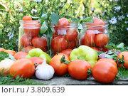 Купить «Консервирование томатов в домашних условиях», фото № 3809639, снято 6 августа 2012 г. (c) Володина Ольга / Фотобанк Лори