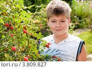Купить «Мальчик около шиповника», фото № 3809827, снято 28 августа 2012 г. (c) Володина Ольга / Фотобанк Лори