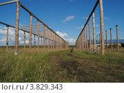Геометрия коровника. Стоковое фото, фотограф Олег Брагин / Фотобанк Лори
