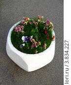Уличный вазон с цветами. Стоковое фото, фотограф Владислав Чеканин / Фотобанк Лори