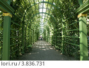 Купить «Летний сад. Санкт-Петербург», фото № 3836731, снято 13 августа 2012 г. (c) Владимир Макеев / Фотобанк Лори
