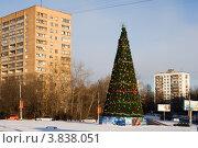 Купить «Новогодняя елка в жилом микрорайоне Москвы», эксклюзивное фото № 3838051, снято 19 февраля 2019 г. (c) Солодовникова Елена / Фотобанк Лори