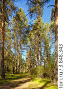 Купить «Сосновый лес», фото № 3848343, снято 10 сентября 2012 г. (c) Serg Zastavkin / Фотобанк Лори