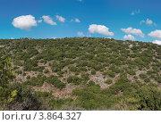 Холм, покрытый невысоким кустарником. Стоковое фото, фотограф Shlomo Polonsky / Фотобанк Лори