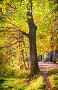 Дуб в осеннем парке, фото № 3865427, снято 26 сентября 2012 г. (c) Julia Shepeleva / Фотобанк Лори