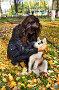 Девушка с щенком собаки породы сибирский хаски (siberian husky) в осеннем парке, фото № 3872259, снято 22 сентября 2012 г. (c) ElenArt / Фотобанк Лори
