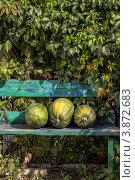 Три зеленые тыквы на лавочке. Стоковое фото, фотограф Тимохина Ирина / Фотобанк Лори