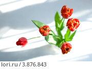 Красные тюльпаны на размытом бело-сером фоне вид сверху. Стоковое фото, фотограф Елена Круглова / Фотобанк Лори