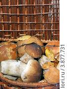 Купить «Лукошко с грибами», фото № 3877731, снято 22 сентября 2012 г. (c) Сычёва Виктория / Фотобанк Лори