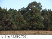 Купить «Сухановский парк», фото № 3890703, снято 29 сентября 2012 г. (c) Кирова Наталья / Фотобанк Лори
