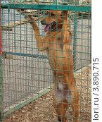 Беспородная собака в вольере приюта для бездомных животных. Стоковое фото, фотограф Елена Мусатова / Фотобанк Лори
