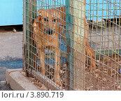 Беспородная собака в вольере приюта для бездомных животных. Страх. Стоковое фото, фотограф Елена Мусатова / Фотобанк Лори