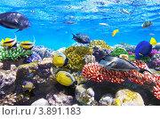 Купить «Коралловый риф в Красном море», фото № 3891183, снято 3 сентября 2012 г. (c) Vitas / Фотобанк Лори