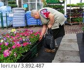 Купить «Пожилая женщина выбирает цветы для посадки в магазине Измайловского совхоза декоративного садоводства, Москва», эксклюзивное фото № 3892487, снято 29 июня 2012 г. (c) lana1501 / Фотобанк Лори
