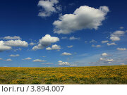 Летний пейзаж цветущего поля и неба с облаками. Стоковое фото, фотограф Алексей Макшаков / Фотобанк Лори