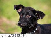 Купить «Портрет собаки на улице в солнечный летний день», фото № 3895191, снято 28 сентября 2012 г. (c) Николай Винокуров / Фотобанк Лори
