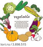 Рамка из овощей на белом фоне. Стоковая иллюстрация, иллюстратор Малинина Наталья / Фотобанк Лори
