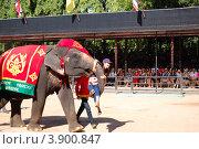 Купить «Представление с известным слоном в тропическом саду Nong Nooch, Паттайя, Таиланд», фото № 3900847, снято 7 сентября 2010 г. (c) Хмельницкий Вячеслав / Фотобанк Лори