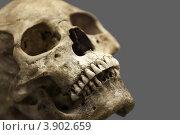 Купить «Человеческий череп», фото № 3902659, снято 22 сентября 2012 г. (c) Илья Андриянов / Фотобанк Лори