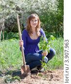 Купить «Женщина высаживает на грядку росток малины», фото № 3907963, снято 11 мая 2012 г. (c) Яков Филимонов / Фотобанк Лори