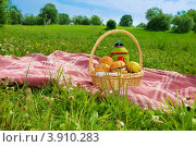 Купить «Пикник на зеленой траве в парке», фото № 3910283, снято 7 июля 2012 г. (c) Сергей Новиков / Фотобанк Лори