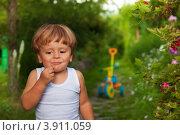 Купить «Маленький мальчик ест красную смородину в саду», фото № 3911059, снято 10 августа 2012 г. (c) Сергей Новиков / Фотобанк Лори