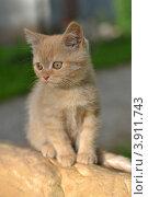 Маленький рыжий котенок сидит на камне. Стоковое фото, фотограф Мария Кобылина / Фотобанк Лори