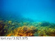 Купить «Дно кораллового рифа в Красном море», фото № 3921975, снято 28 декабря 2011 г. (c) Яков Филимонов / Фотобанк Лори