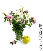 Букет полевых цветов в стеклянной вазе на белом фоне. Стоковое фото, фотограф Наталья Будаева / Фотобанк Лори