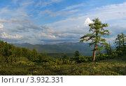 Пейзаж с лиственницей. Стоковое фото, фотограф Владимир Бизюлев / Фотобанк Лори