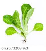 Купить «Листья салата корн на белом фоне», фото № 3938963, снято 5 июля 2010 г. (c) Лисовская Наталья / Фотобанк Лори