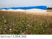 Купить «Хлопковое поле и собранный в кипы хлопок-сырец», фото № 3954343, снято 12 октября 2012 г. (c) Ирина Кожемякина / Фотобанк Лори