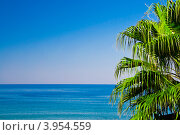 Пальмовая ветвь вид на море. Стоковое фото, фотограф Евгений Егоров / Фотобанк Лори