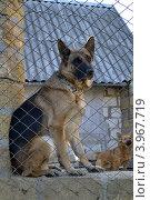 Собака на посту. Стоковое фото, фотограф Иванна Кошка / Фотобанк Лори