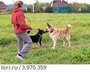 Купить «Хозяйка выгуливает собаку на поляне на даче», фото № 3970359, снято 7 сентября 2012 г. (c) Елена Мусатова / Фотобанк Лори