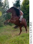 Конь встал на дыбы. Стоковое фото, фотограф Вера Вершинина / Фотобанк Лори