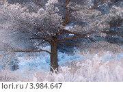 Купить «Красивое раскидистое дерево под снегом», фото № 3984647, снято 17 декабря 2011 г. (c) Nikitin / Фотобанк Лори