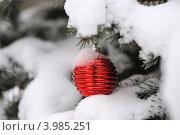 Рождественская игрушка на ветке ели в снегу. Стоковое фото, фотограф Светлана Давыдова / Фотобанк Лори