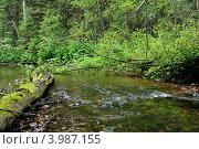 На лесной реке. Стоковое фото, фотограф Юлия Алесич / Фотобанк Лори
