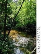 Маленькая речка. Стоковое фото, фотограф Юлия Алесич / Фотобанк Лори