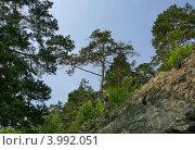 Скала в п. Листвянка на Байкале. Стоковое фото, фотограф Алина Сысоева / Фотобанк Лори