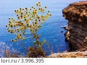 Южный чертополох. Стоковое фото, фотограф Антон Юрченков / Фотобанк Лори